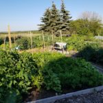 Lawson Heights Garden Meeting Sept. 6th